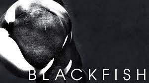 blackfishx